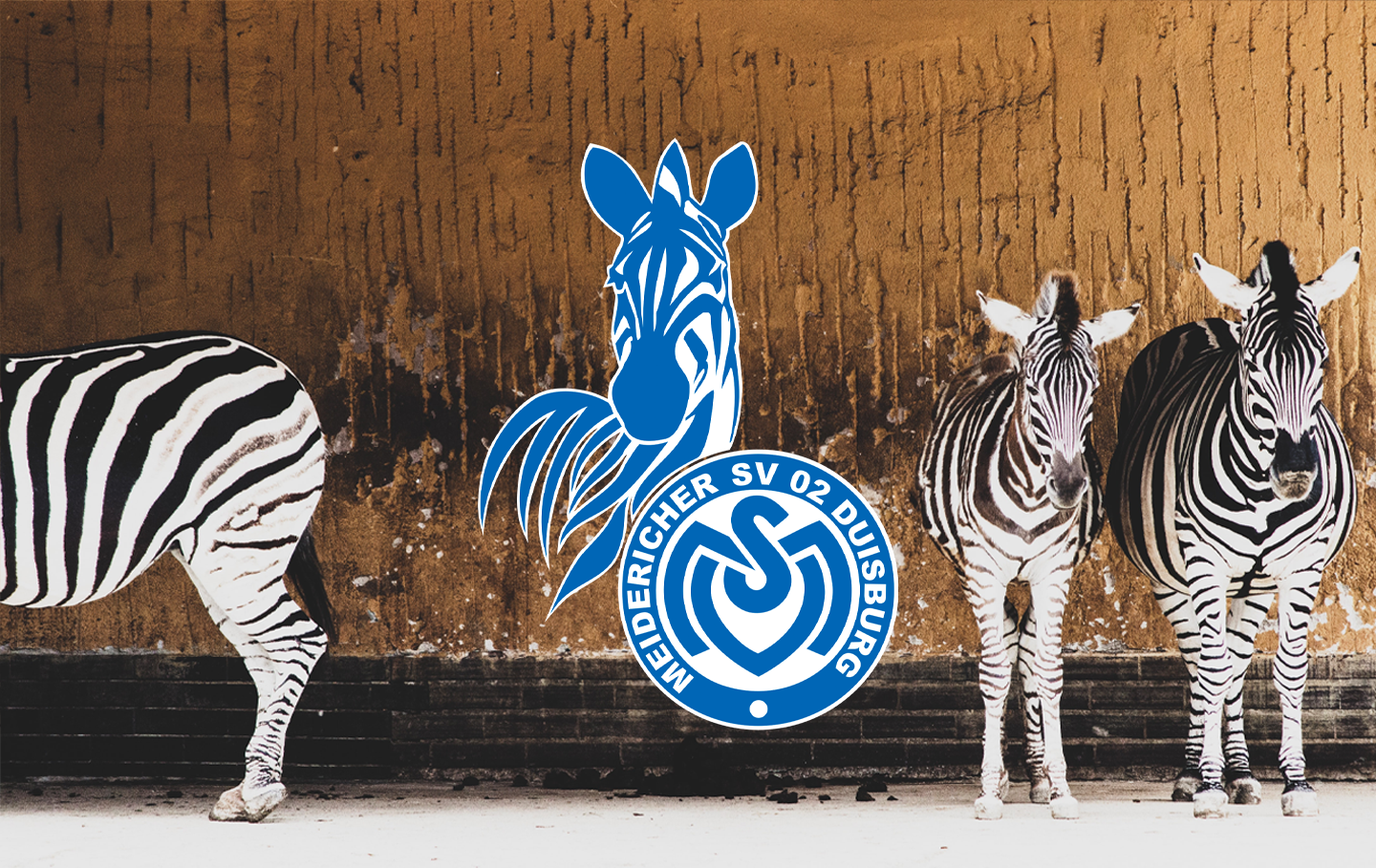 Badge of the Week: MSV Duisburg